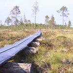 Suomen maapinta-alasta on kolmasosa turvemaita