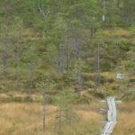 Näkökulmana ekosysteemipalvelut